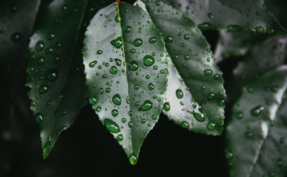 Fotografieren bei Regen